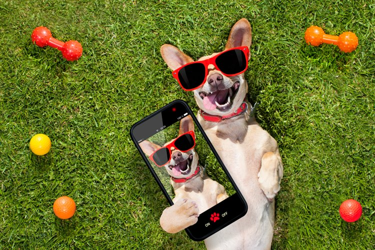 dogs with sunglasses lying on the grass, looking cool