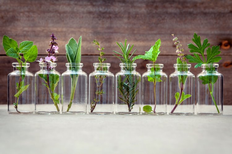 row of plants in clear jars